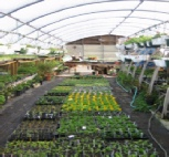 Beckys Greenhouse Pic.jpg